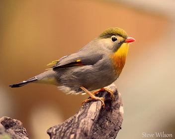 Colourful Bird (EXPLORE) - Kostenloses image #289089