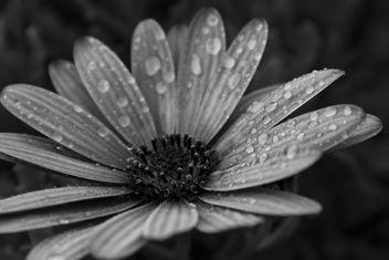 Flower - Free image #289539