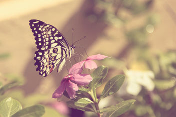 Butterflies are self propelled flowers. ~ R.H. Heinlein - image gratuit(e) #289969