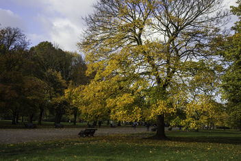 Kensington Park - colours of autumn - Free image #290259