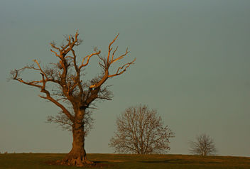 Trees lit by the setting sun, Leighton Moss, Silverdale, Lancashire, UK - бесплатный image #290509