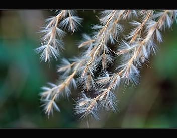 Winter grass - Free image #290649