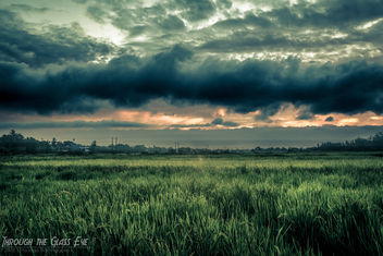 Paddy Field at Dusk - image gratuit #290719