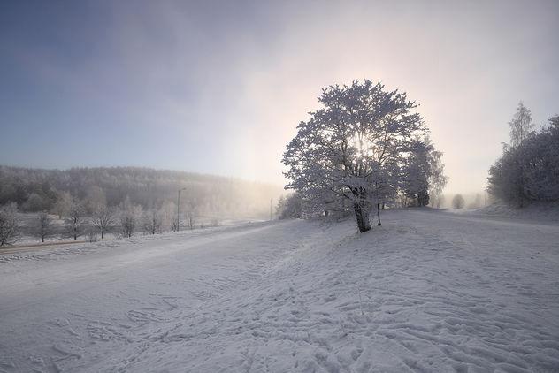 Winter Glow - Free image #290769
