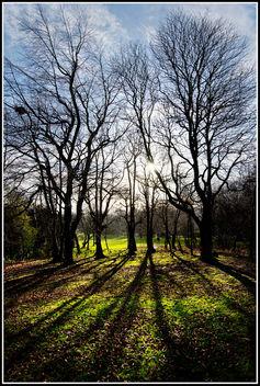 Winter Sun - image gratuit(e) #290929