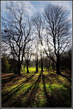 Winter Sun - Free image #290929