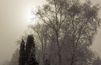 Winter Mist - Free image #291119