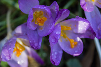 spring flowers - Free image #291129
