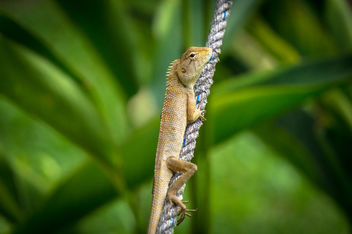 Tiny Lizard - Free image #291339