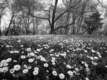 One million flowers - Kostenloses image #291379