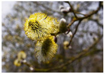 Yellow - image #291439 gratis