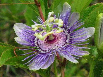 Wild flower - Free image #291679