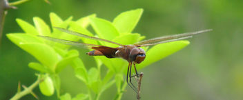 Dragonfly - Free image #291689