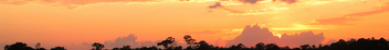 Tree Line Sunset - image #291879 gratis