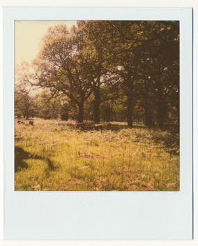 Richmond Park - image gratuit(e) #292029