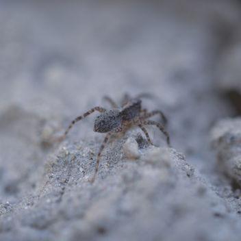 Hey Spider! - Free image #292299