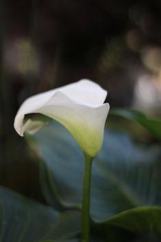 White flower - Free image #292399