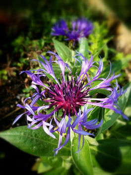 Purple flower - image #292499 gratis