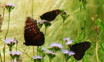 Dancing Butterflies - Kostenloses image #292729
