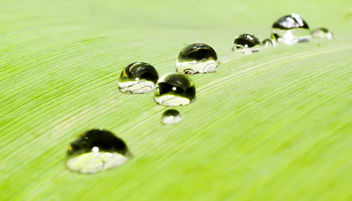Water drops - Free image #292959