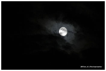 Dark On The Moon...... - Free image #293339