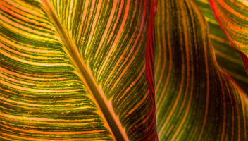 Stripes 2 - Free image #293399