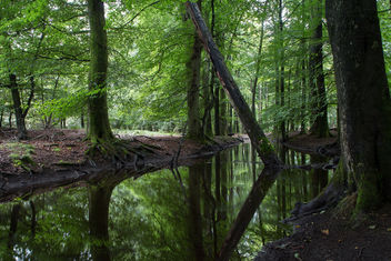 Mirror Stream - Free image #293429