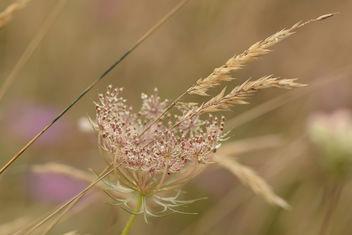 Herbes des champs dans le vent ... - image #293529 gratis