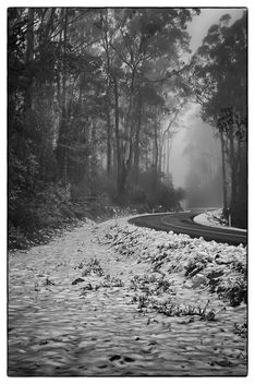 Snowy Forest Road - Kostenloses image #293569