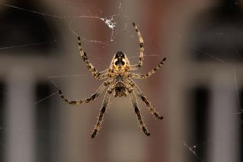 Spider - Free image #293719