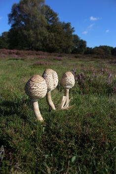 Mushroom in landscape - image #293899 gratis