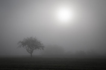 autumn - fog in the morning - Kostenloses image #294079