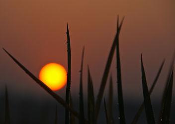sunrise - Free image #294339