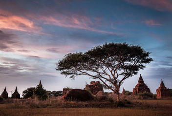 Bagan Tree - image #295139 gratis