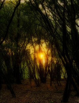 Sunny dream - image #295229 gratis
