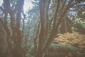 Moss. - Free image #295259
