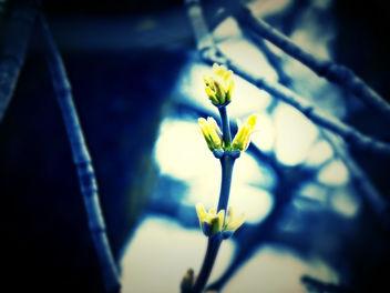 Nature - бесплатный image #295659