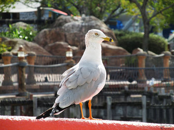Seagull - Free image #295689