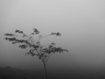 mist tree - Kostenloses image #296069