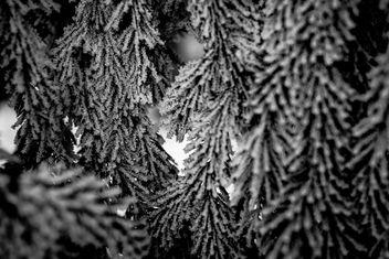 Frozen - Free image #296209