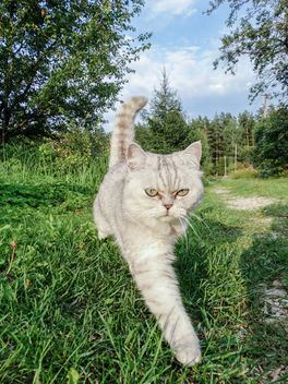 Cat - Free image #296479