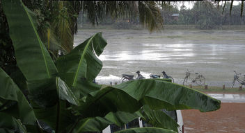 Siem Reap-Heavy Rain - Free image #296499