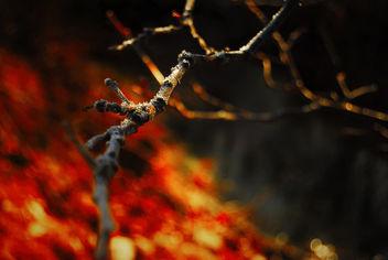 La Branche - Free image #296549