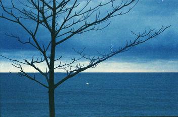Tree - image #296939 gratis