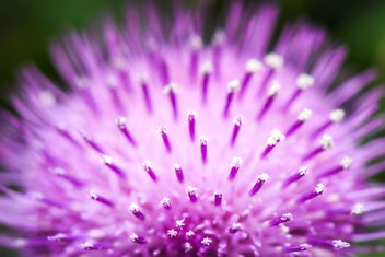 Flowers macro - Free image #296949