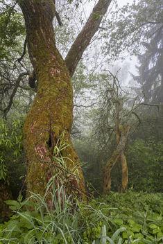 tree - image #297019 gratis