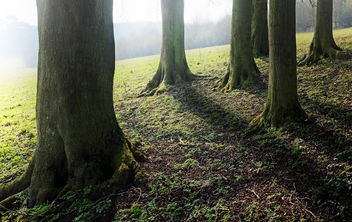 Copse on the Hill, Cotswolds, Gloucestershire - Free image #297039