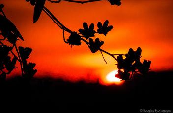 Sunset - Free image #297119