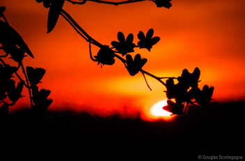 Sunset - Kostenloses image #297119