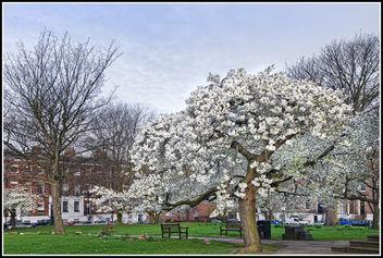 White Blossom - Free image #297139
